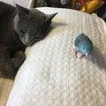 ほくのたこやき 猫とインコ