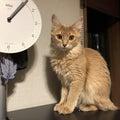 腕時計と酒と山と猫を愛でる会