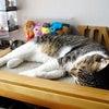 日曜日の猫らの画像