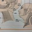 首コリと顔がたるむ、大きくなる関係性