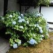 6月17日 尊陽院(京都市)でいただいた六月の御首題