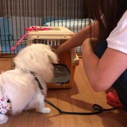 画像 犬がクレートを好きになるコツ♡ の記事より 6つ目