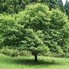 キセキレイ 樹木葬の画像