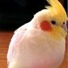 小鳥が亡くなるときに・・・の画像