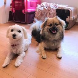 画像 ほめほめホーム犬の保育園♡6月18日 の記事より 1つ目
