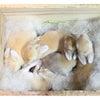 茨城県水戸市にあるウサギ販売店「プティラパン」 ホーランド・ロップ『ミルク』ベビー 6/11生⑤の画像