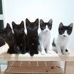 保護猫黒白5匹⑥ワクチン1本目接種とその他もろもろ
