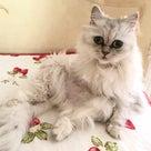 オシャレ♪籠バッグ 旬彩ランチこころ 乳がん 湯着 旅行 温泉タオルン 猫 プリンセスのんのの記事より