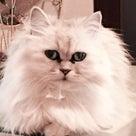 可愛いアンブレラ フランフランの器 カフェ 猫 乳がん 湯着 温泉タオルン プリンセスのんのの記事より
