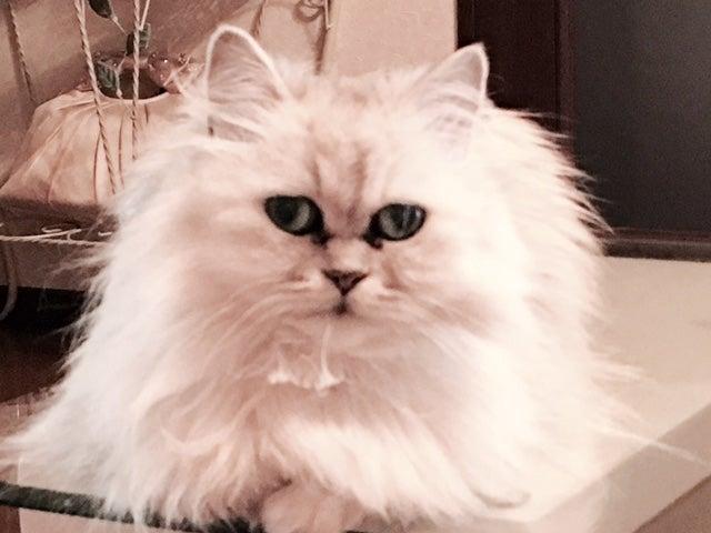広島地方も梅雨入り バラ柄雨傘 可愛いカゴバッグ 猫 乳がん 温泉タオルン プリンセスのんのの記事より