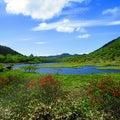 980.その4。湿原とレンゲツツジと、エゾハルゼミと水鳥と、白い雲と青い空と雲の影。グンマー帝国