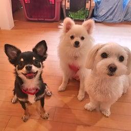 画像 犬の要求吠えの解決法♡ の記事より 1つ目