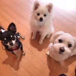 画像 犬の要求吠えの解決法♡ の記事より 2つ目