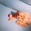【悲報】愛犬を置いて外泊した結果