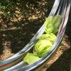 『笹だんご作りイベント』が開催されました☆の画像