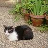 猫の楽園の画像