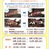 【PET PLEX日吉店】無麻酔歯石取りのお知らせの画像