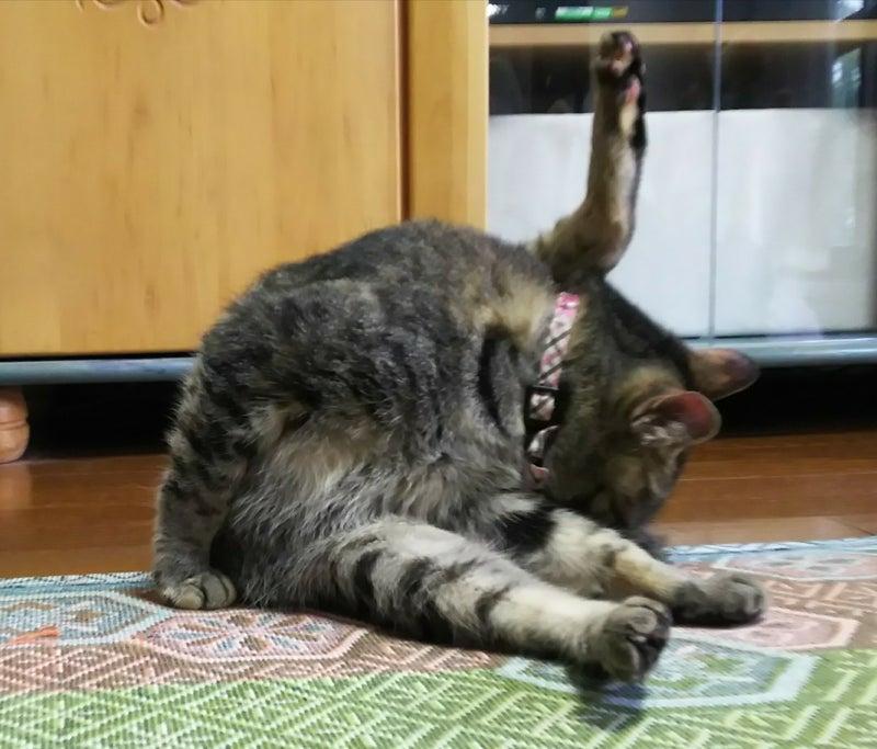 こう 絞り せん 猫 もん