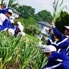 2019田子小学校掘り取り体験!の画像