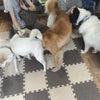 保護犬と、悩みを抱える若者を救う『キドックスファーム』にお邪魔してお片付けしてきました。の画像