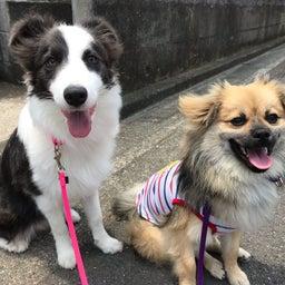 画像 愛犬と安全で快適なお散歩のために♡ヒールポジション の記事より 1つ目