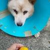 緊急❗️❗️売却になり取り壊されるお家に一人ぼっちのミックス犬ミッキー君の画像