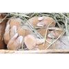 茨城県水戸市にあるウサギ販売店「プティラパン」 ホーランド・ロップ『ミルク』ベビー 6/11生⑥の画像