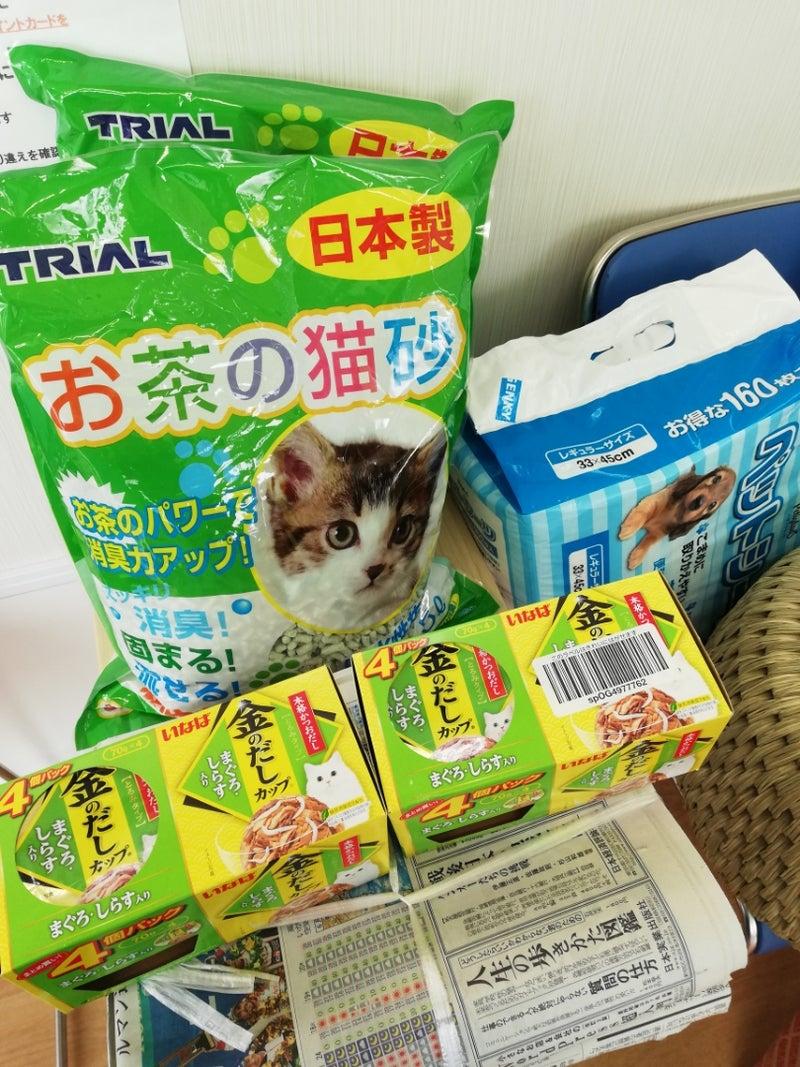 譲渡会が終わりましたm(_ _)m | 西三河 Dog & Cat 岡崎市