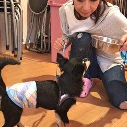 画像 食事を守って唸る犬にしないために♡ の記事より 3つ目