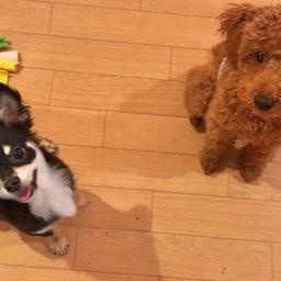 画像 食事を守って唸る犬にしないために♡ の記事より 9つ目
