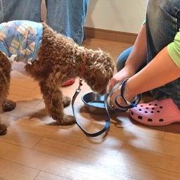 画像 食事を守って唸る犬にしないために♡ の記事より 6つ目