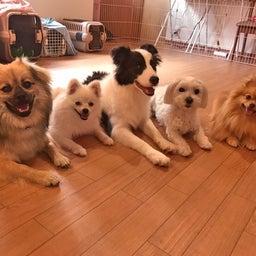 画像 ほめほめホーム犬の保育園♡6月25日 の記事より 3つ目