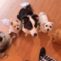 画像 ほめほめホーム犬の保育園♡6月25日 の記事より 2つ目