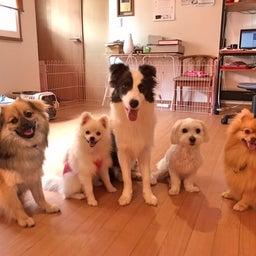 画像 ほめほめホーム犬の保育園♡6月25日 の記事より 1つ目