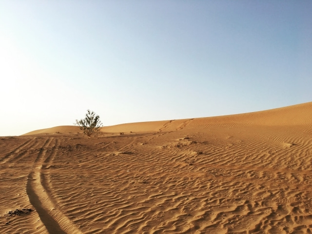 砂漠の画像