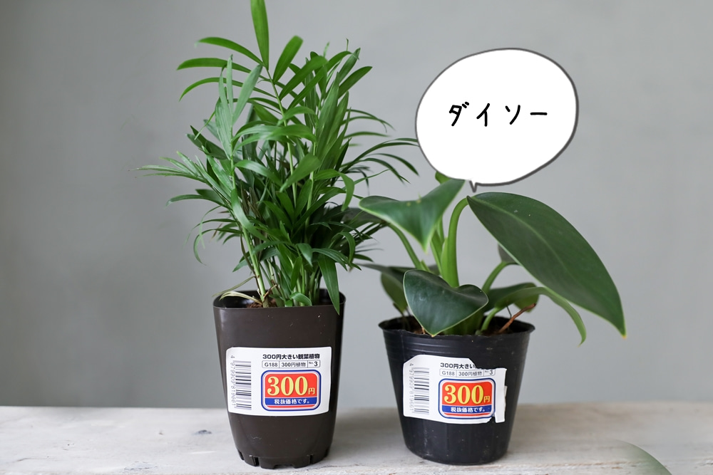 【100均サボテン】ダイソー・セリアの14個 ...