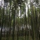 伏見稲荷大社〜嵐山〜ふくろうカフェへ♪①の記事より