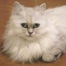可愛いハート付き三つ折り財布 今月のネイル 乳がん 旅行 温泉タオルン 猫 プリンセスのんの  の記事より