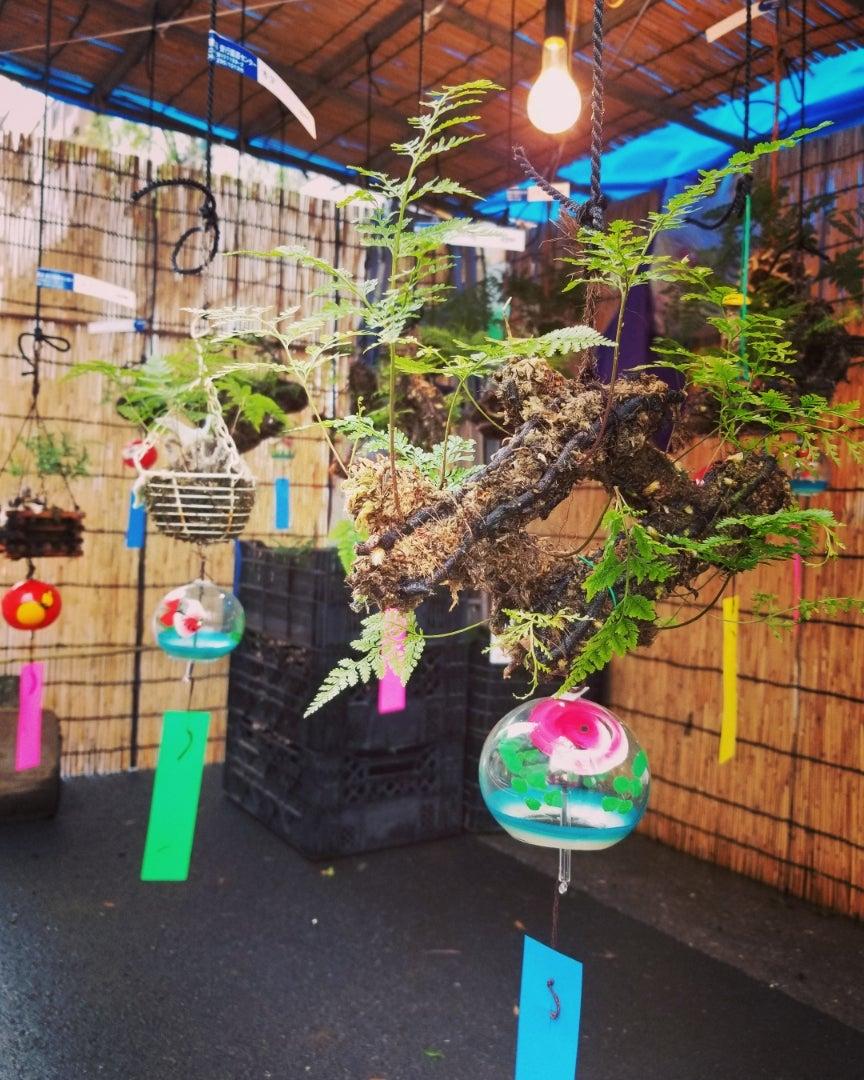 吊り荵 | 市川猿紫夢道中