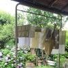 草木染めワークショップ ヨモギとローズマリーの画像
