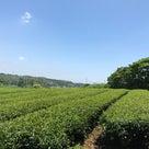 今年も二番茶をやらない茶農家の記事より