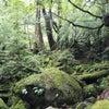 白谷雲水峡(その2)~屋久島ライトワークの旅日記~の画像
