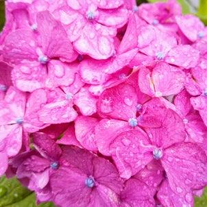 梅雨の合間にガーデン・タイルの洗浄♪の画像