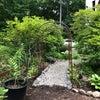 庭の大開拓 その後の画像