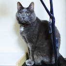 小説「人生を変えた猫」第3話の記事より