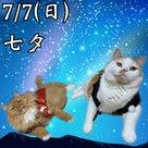 7/7 七夕の記事より