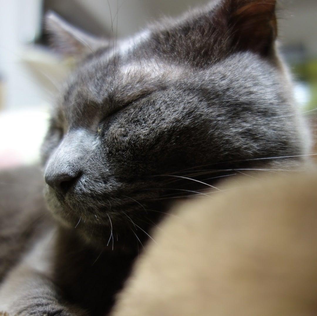 小説「人生を変えた猫」第4話の記事より