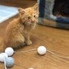 もぃちゃん❤️は、沖縄の仔猫ちゃんの画像