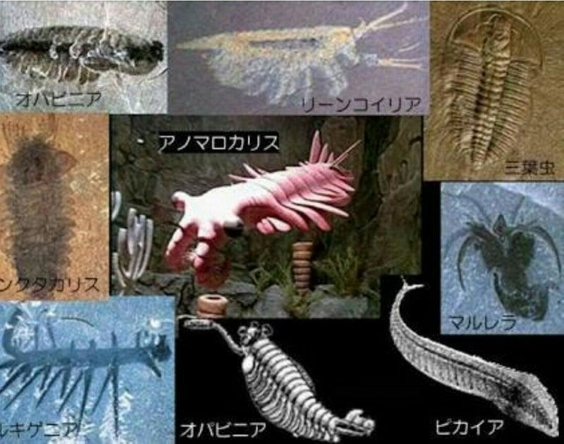 シリウス・パセット動物群 - Sirius Passet - JapaneseClass.jp