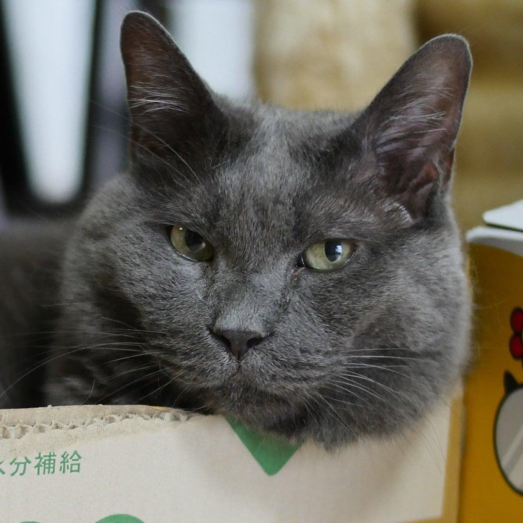 小説「人生を変えた猫」第5話の記事より